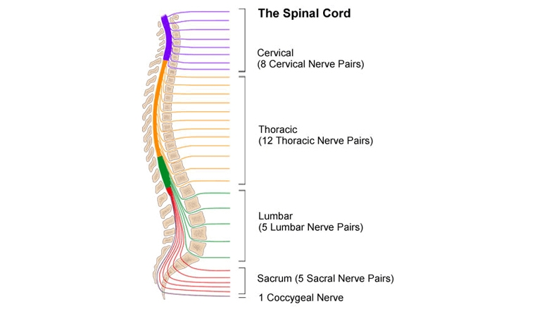 acute spinal injury illustration