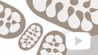 Mitochondria Video Thumbnail