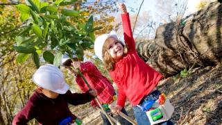 kids planting tree