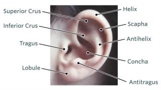 Normal Kulak Görüntüsü