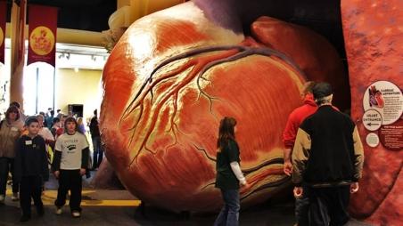 Franklin Institute Cardiac Adventure