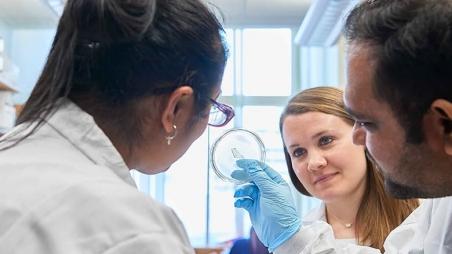Three lab workers studying petri dish