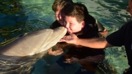 mother and son swimming with dolphins