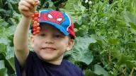 Lucas picking berries