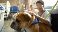 Boy petting therapy dog